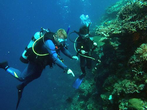 Student exploring the reef by Tiak Lee