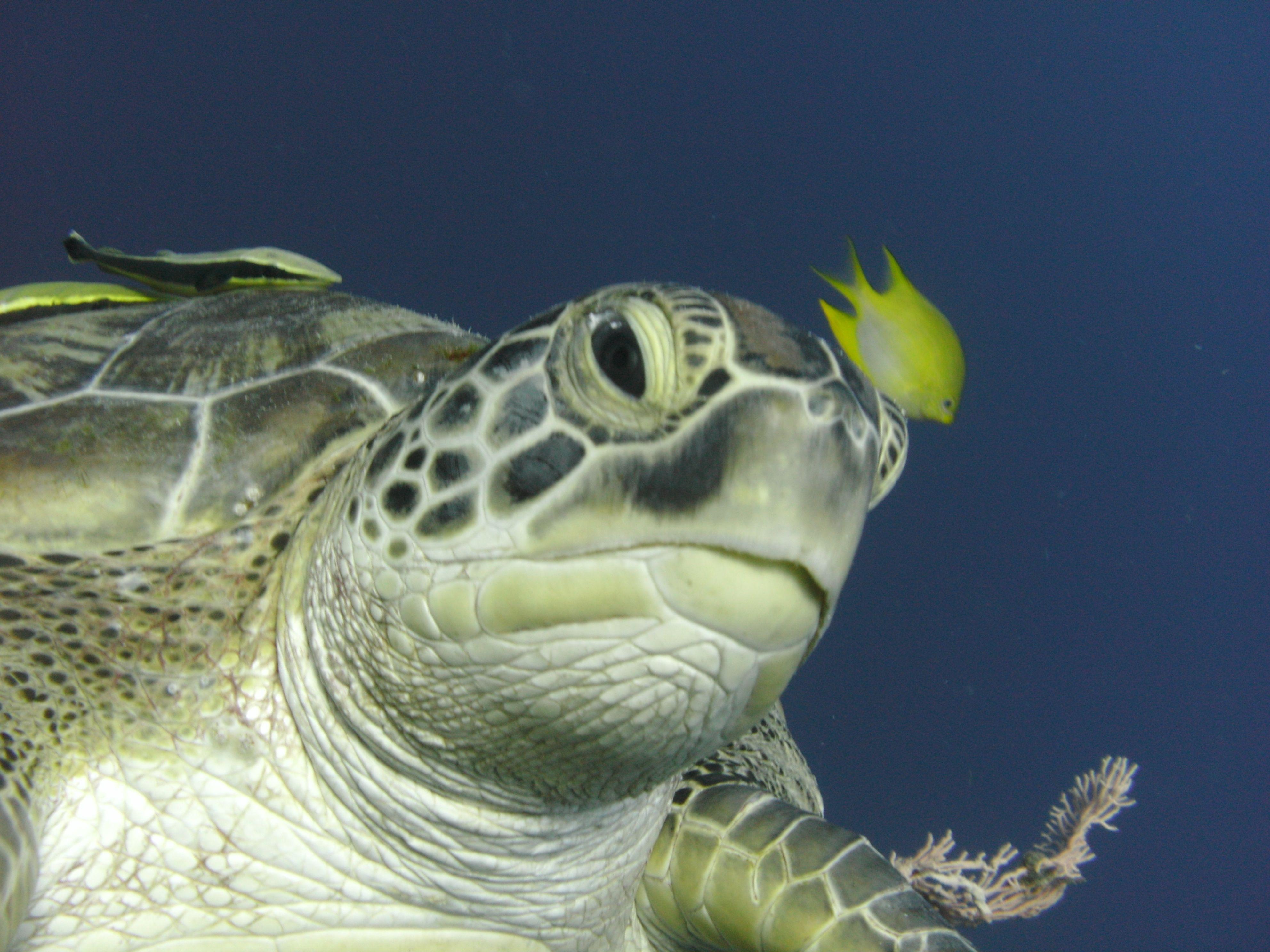 Sea Turtle by Robert Kelly