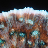 Colorful hard coral