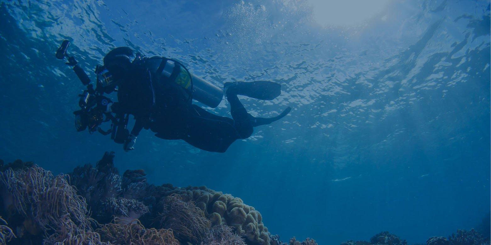 Dive Gallery 1.jpg