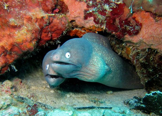 Eel hiding inside corals