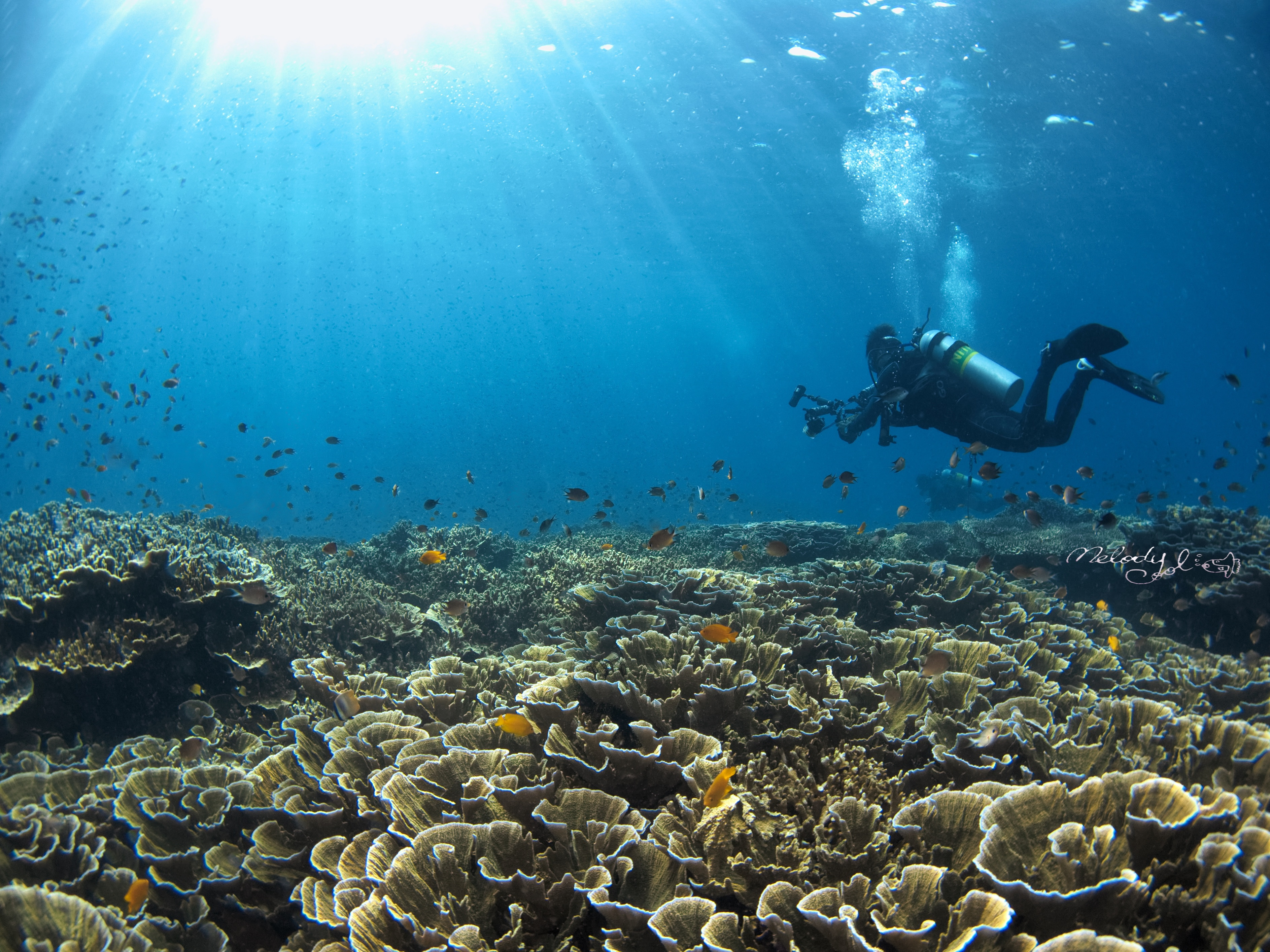 Corals by Cool.jpg