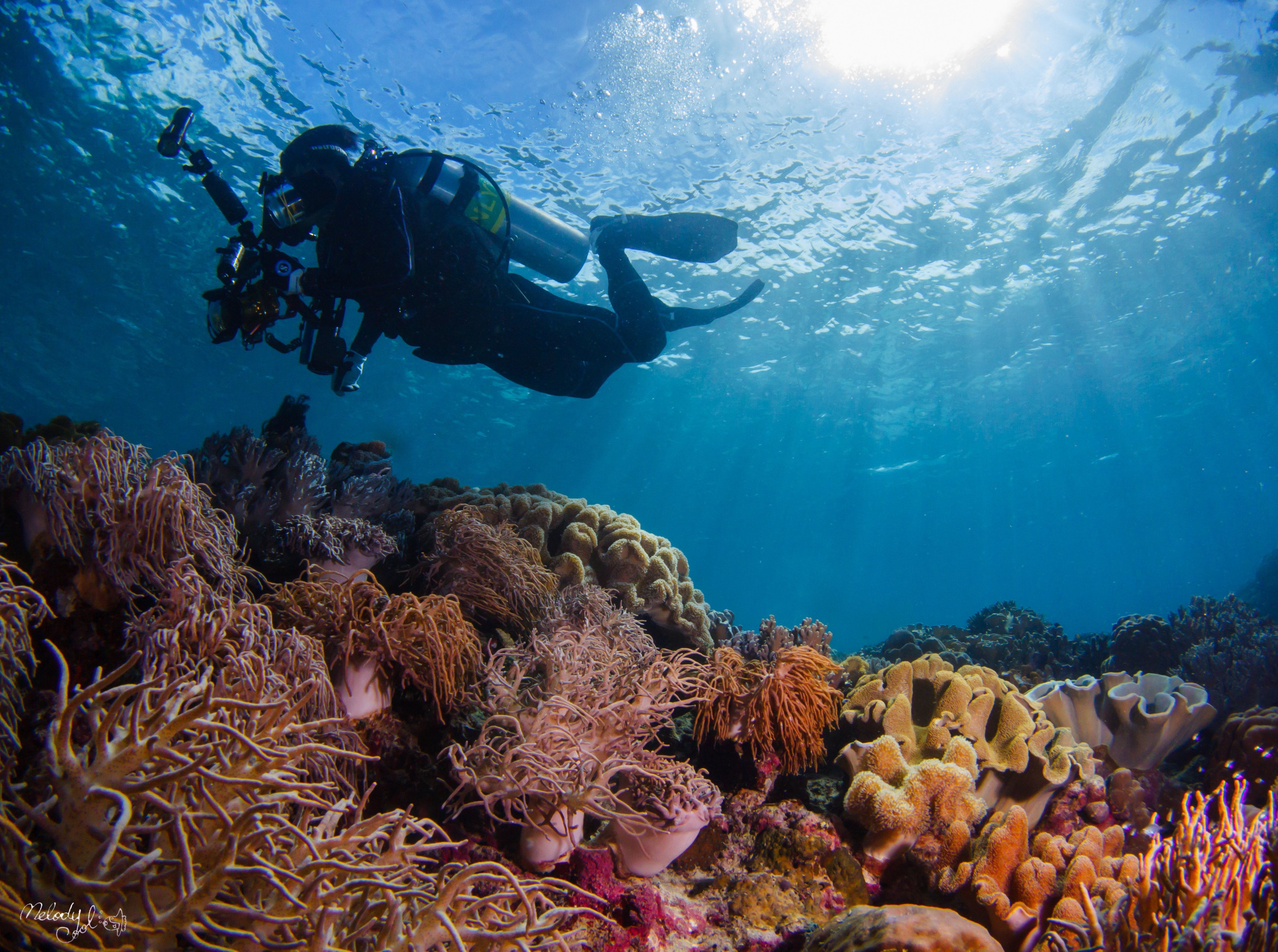 Diver and corals by Cool.jpg