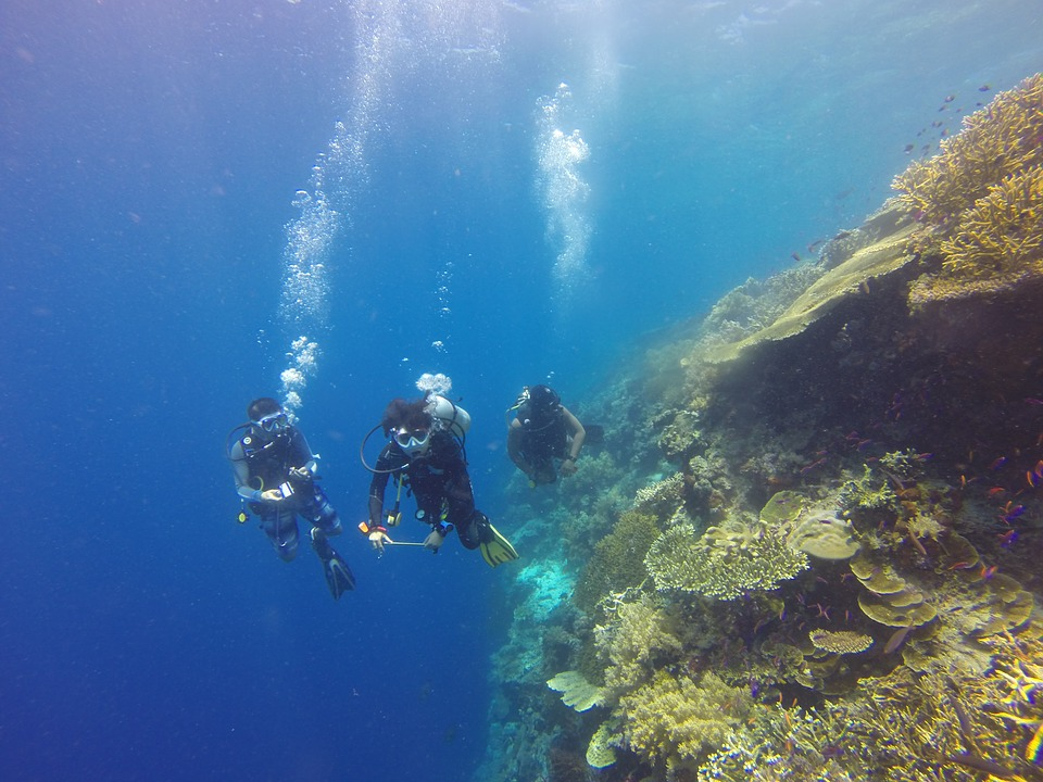 Scuba diving coral wall